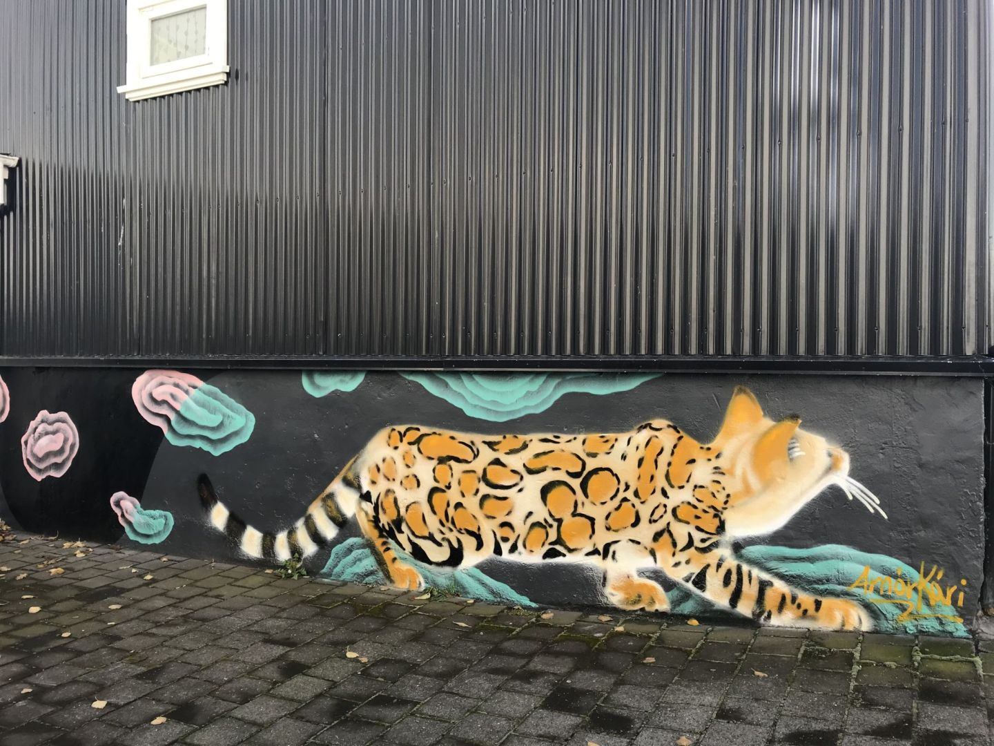Amor Kari Cute kitty Bengal cat street art in Reykjavik