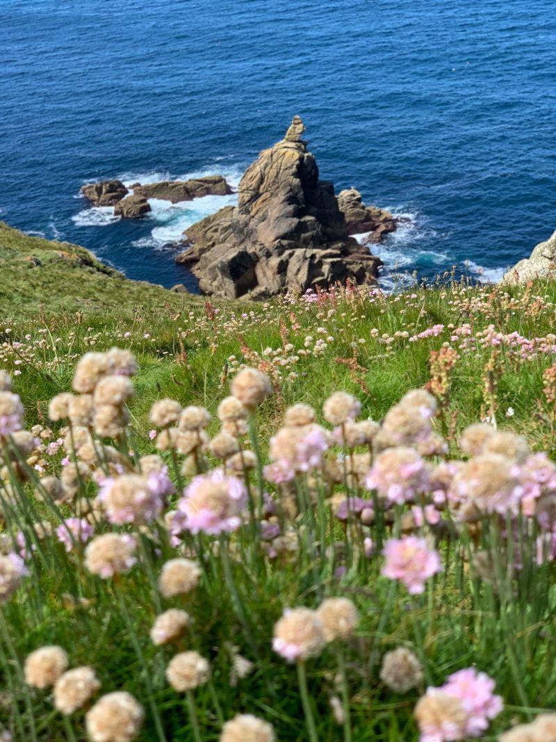 Cornwall-rugged-rocks-coastal-flowers