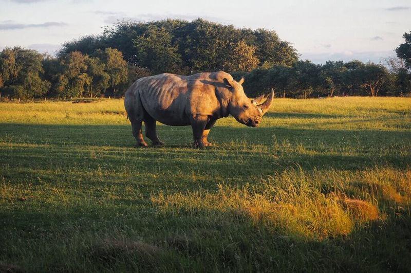 Sunset Rhino at Whipsnade Zoo