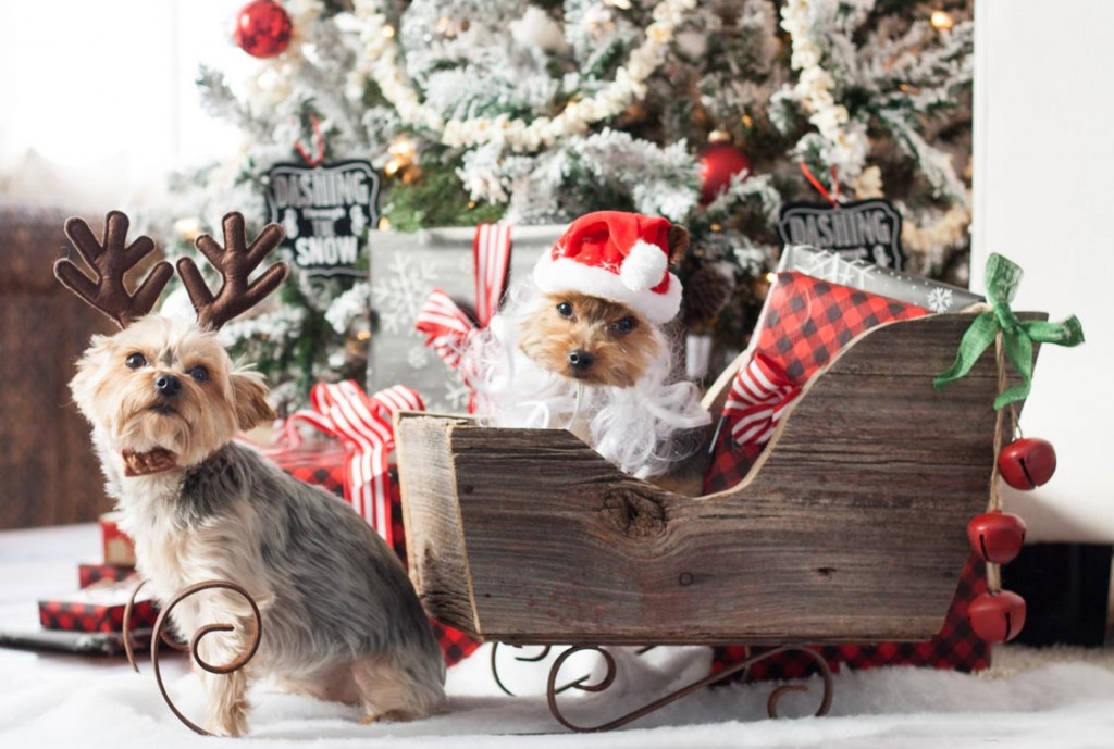 A Very Yorkie Christmas The Lilypad Cottage
