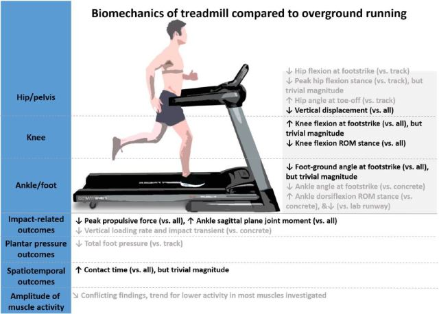 Differences in biomechanics