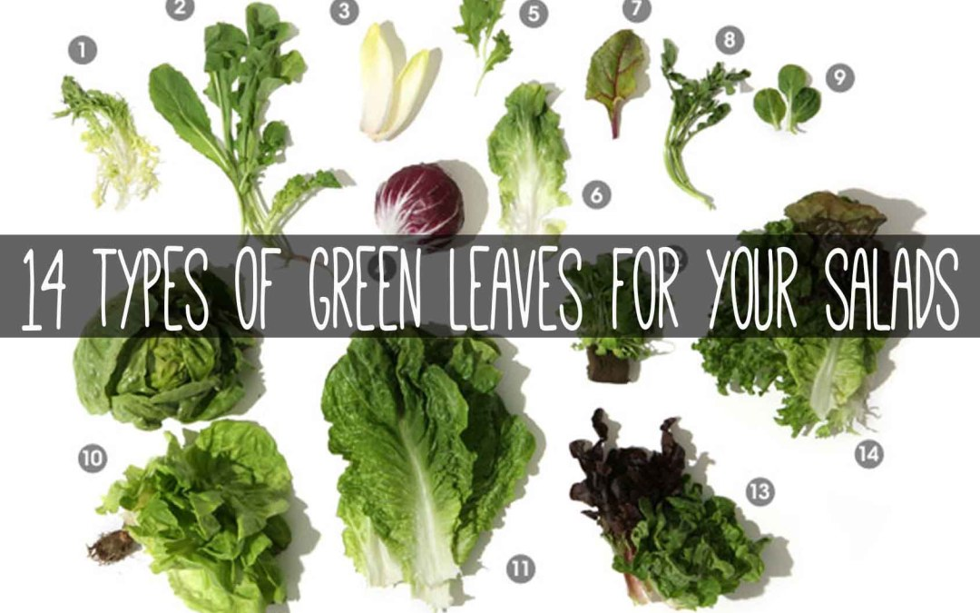 14 Types of Green Leaves for Your Salads