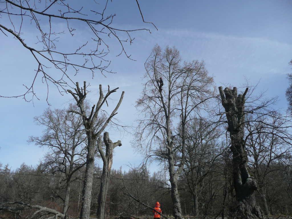 tree surgery shropshire