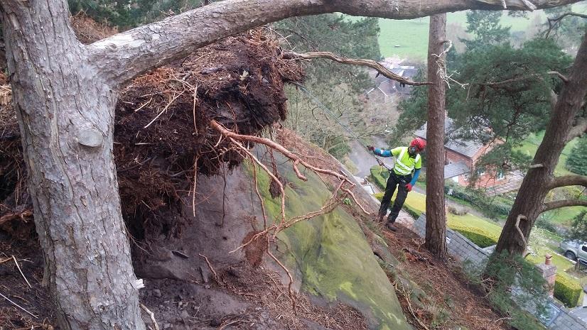 Tree Storm Damage