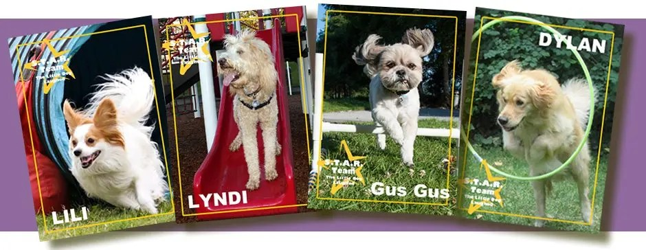 Sports cards for four of our team dogs