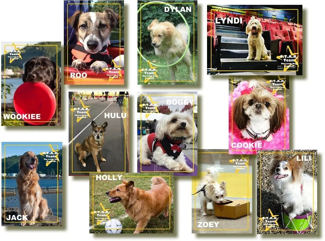 Meet the S.T.A.R. Team Dogs!