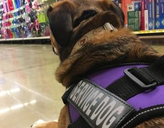 Finn the service dog