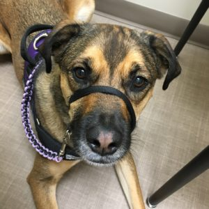 Finn the service dog at Cystic Fibrosis clinic