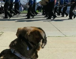 Finn at the Memorial Day Parade