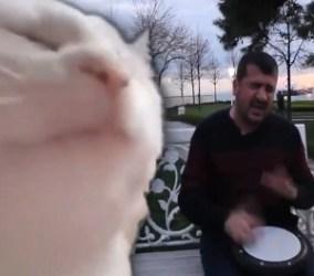Il gatto che balla Parippappa chi è il musicista che suona