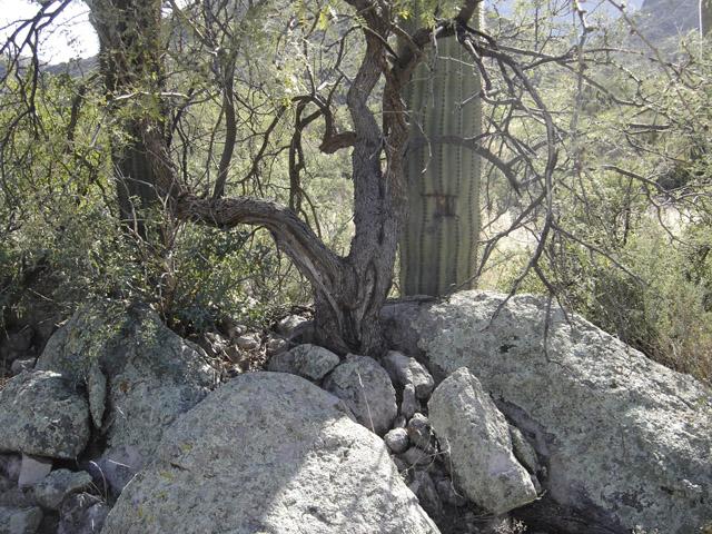Cactus Marker