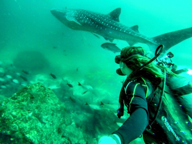 Whale Shark Scuba Diving