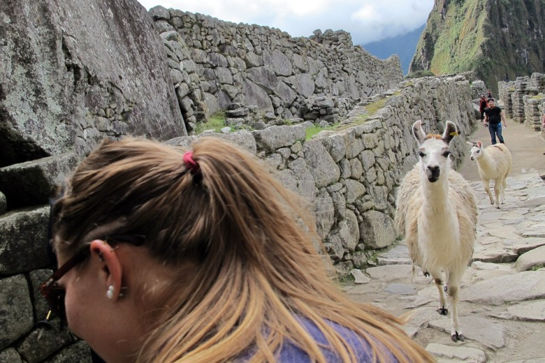 The llama hunting me down through the ruins of Machu Picchu. Not funny.