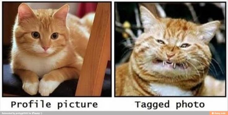 funny animal meme tagged profile cat