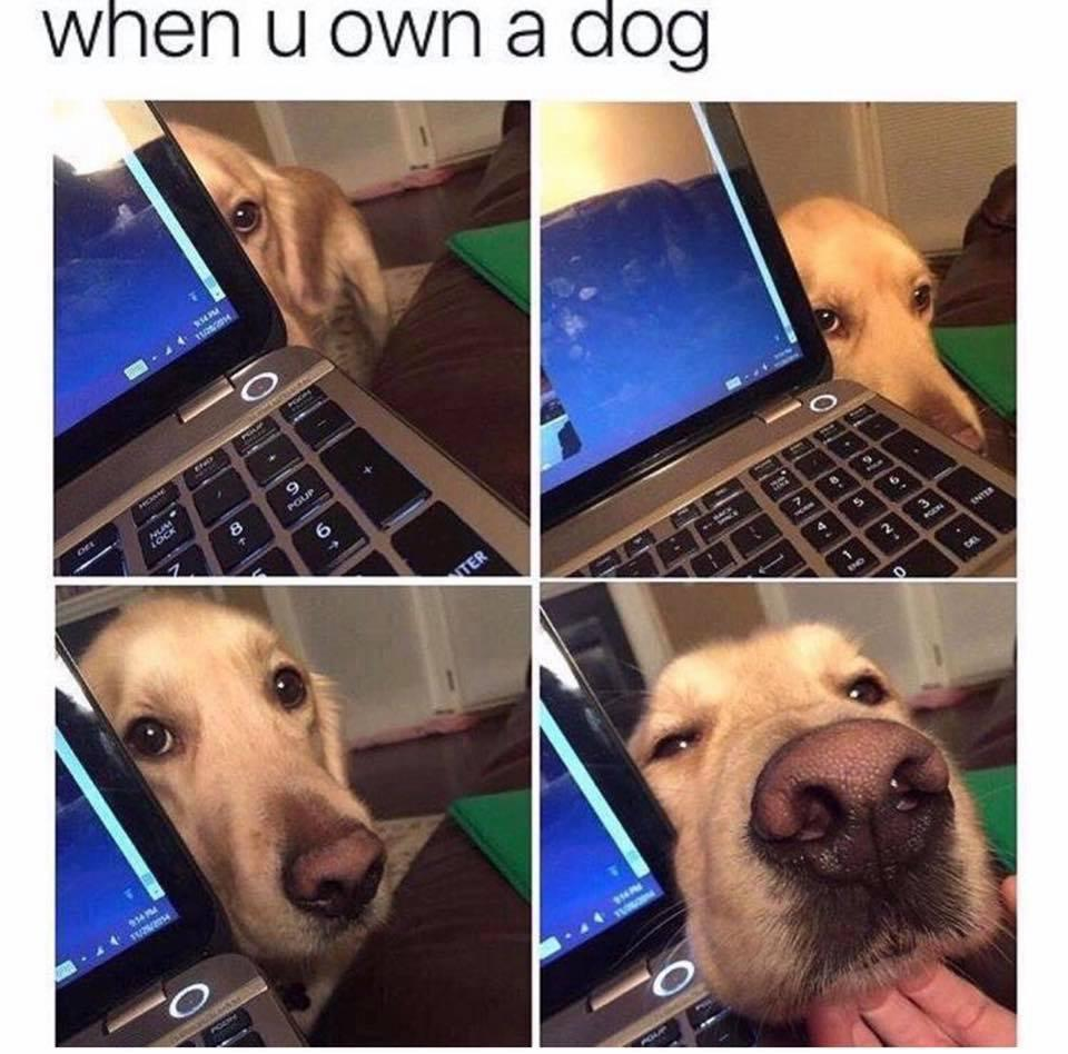 when you own a dog funny animals