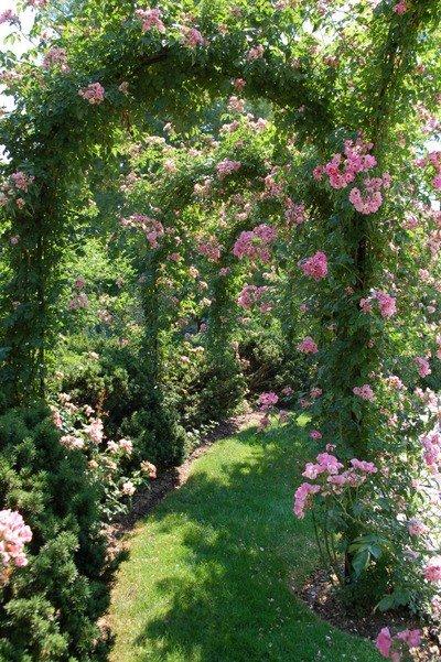 arcos de rosas