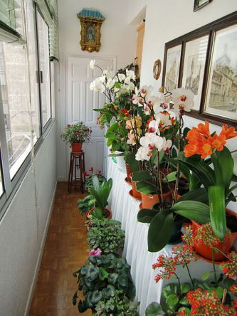 indoor gardens apartment design The Lovely Plants - Part 11