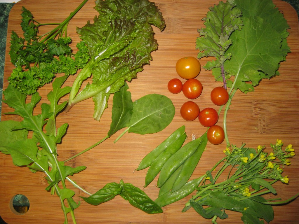 Garden fresh parsley, leaf lettuce, baby kale, sorrel, sweet basil, arugula, snow peas, tomatoes and rapini flowers