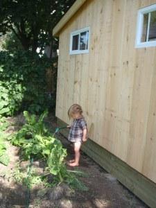 urban garden Ottawa Ontario compost kale sustainable agriculture