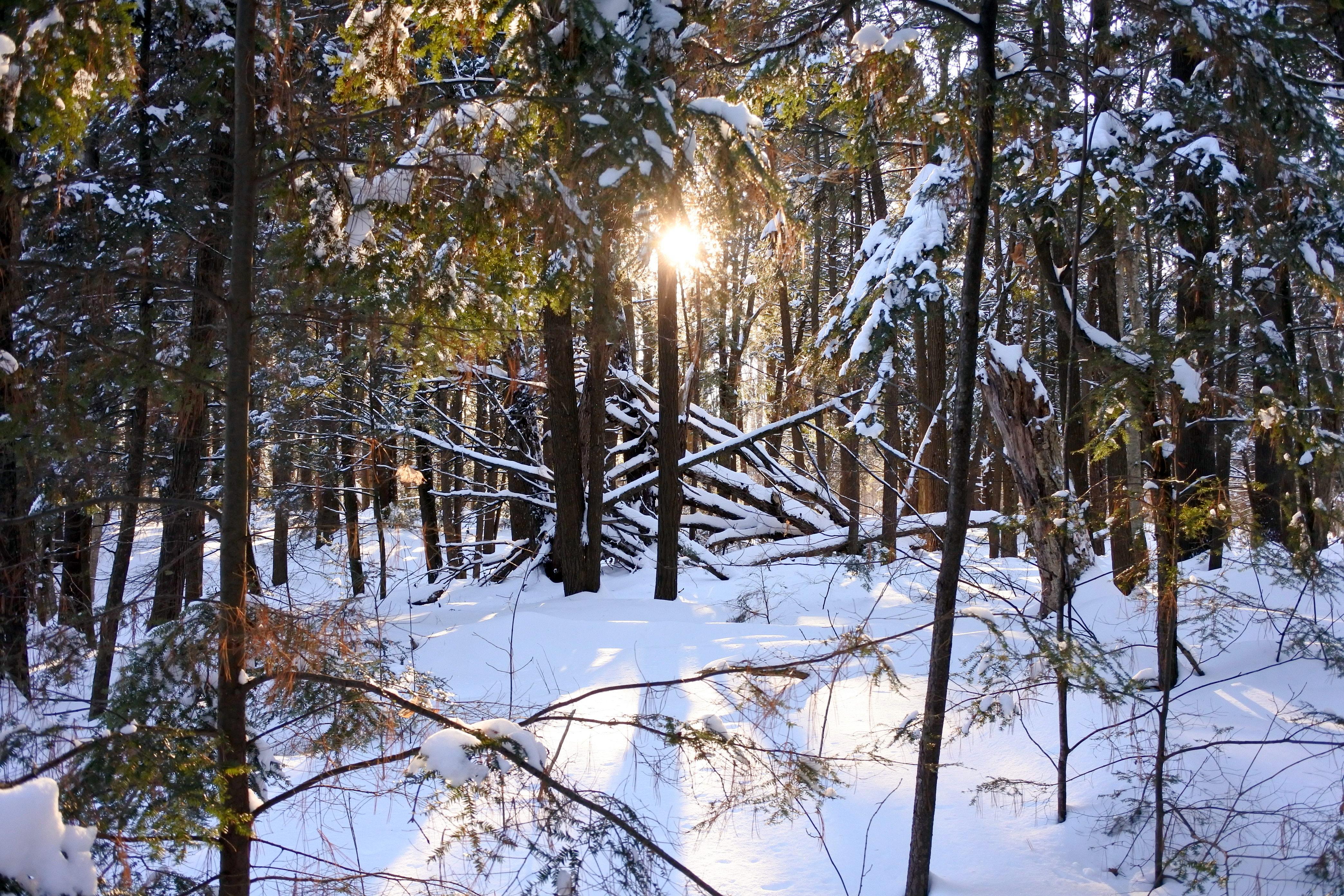 Clarke Woods Navan Ontario winter forest walk