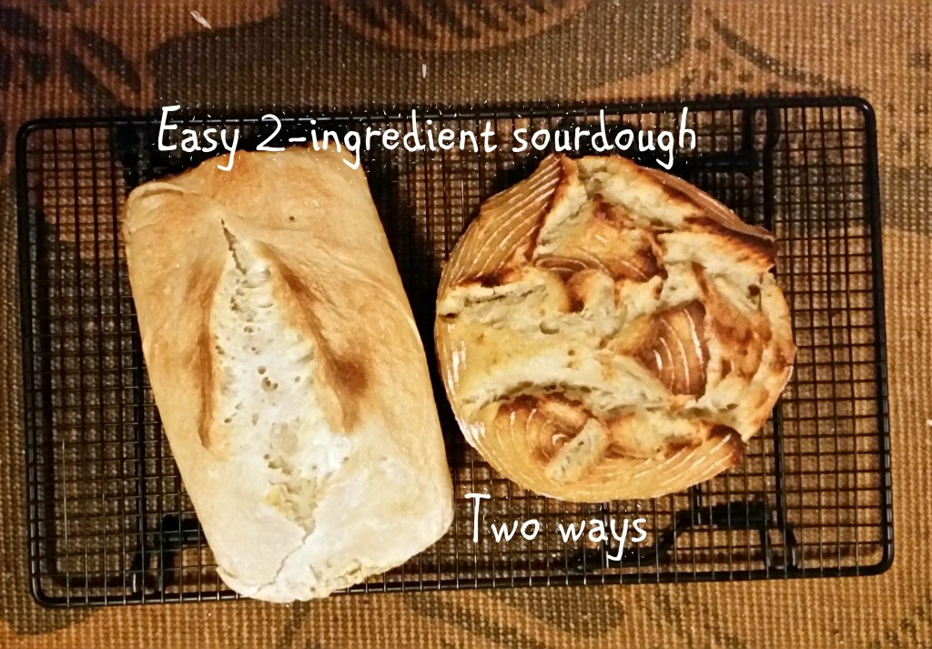 sourdough bread fermented starter culture rustic sandwich ingredients baking ottawa recipe jackie lane vegan gluten