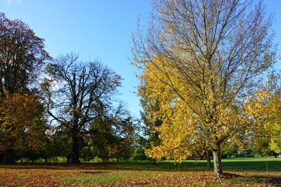 Hyde Park in autumn