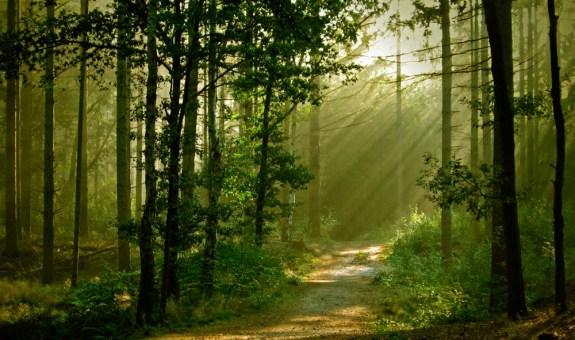 Conoce los secretos del bosque, en Torrejón
