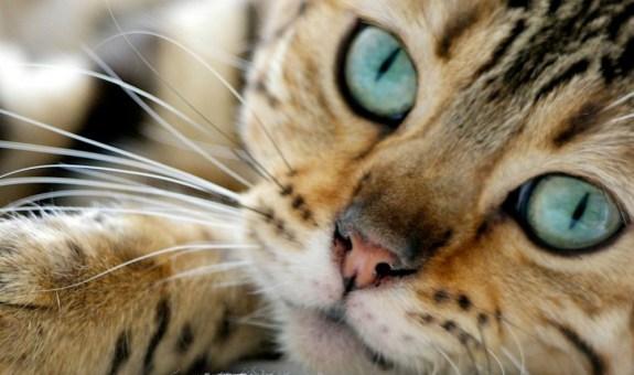 El pienso más exquisito para tu gato