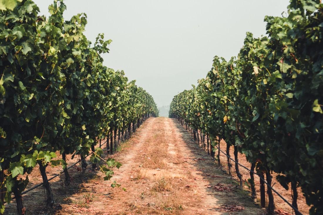 Abacela Vineyards