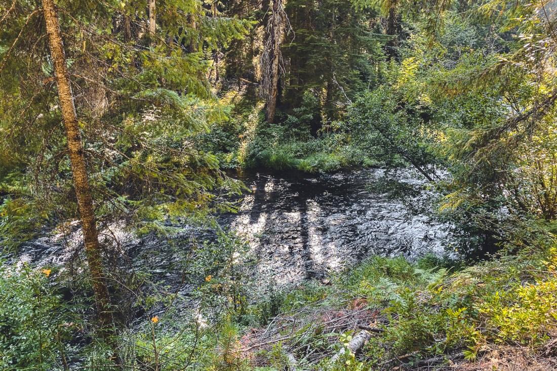Lemolo Falls North Trail Next to River