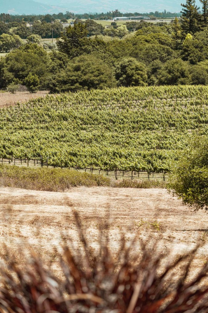 View of the Vineyards from Fog Crest's Outdoor Patio