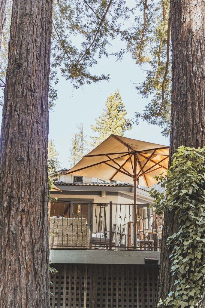 Redwood Trees and Outdoor Front Patio of Simi Winery