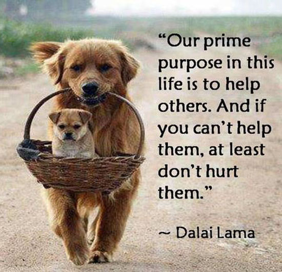 primary purpose in life to help others - 7.14.14 post