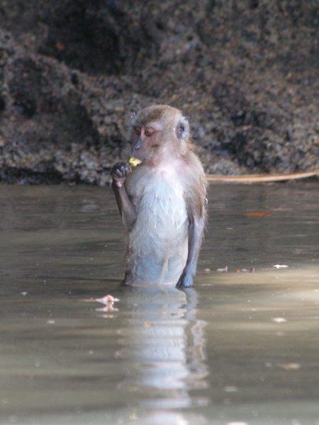 Monkey Ao Thalane - Thailand Kayaking