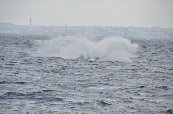 whale-breaching-japan_9790