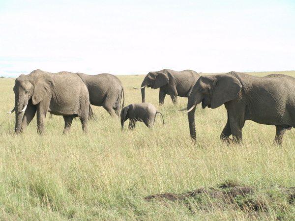 Baby elephants in Africa