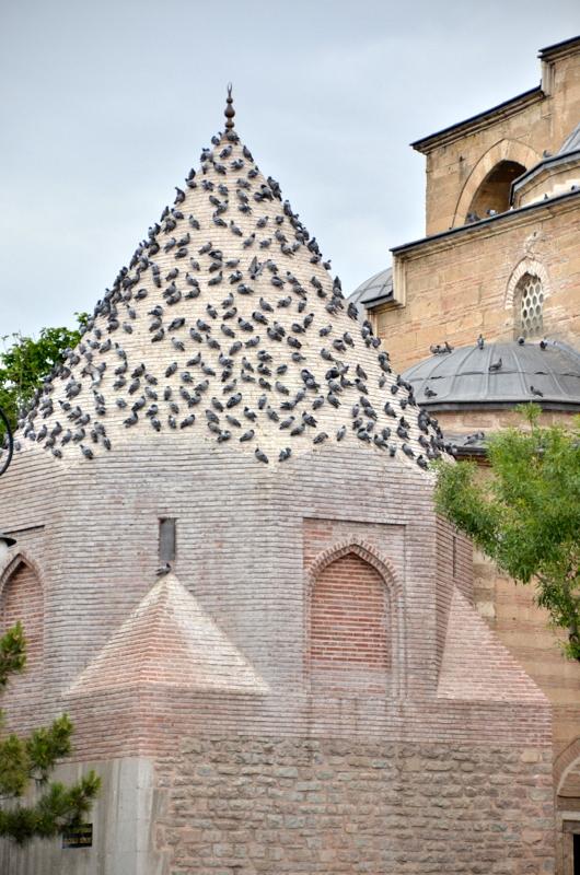 mosque-pigeons-konya-turkey