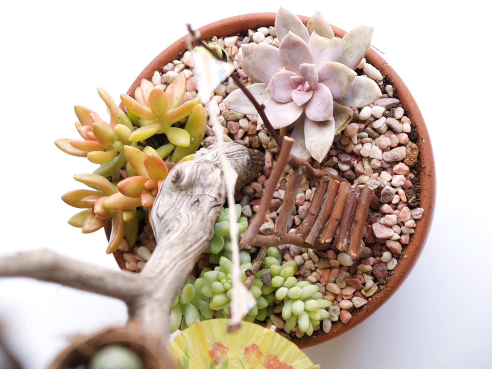 Gnome Garden: Tutorial For A Succulent Fairy Garden