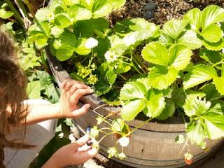 Fairy Garden, miniature garden for the fairies