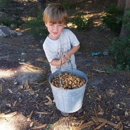 Collecting Acorns.