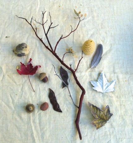 Collected Nature Bits : www.theMagicOnions.com
