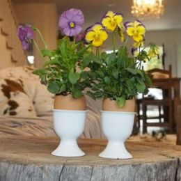 Planting Mini Pansies in Egg Shells for Easter Decorations