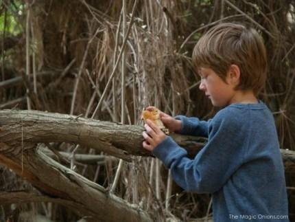 Nature Walk : The Magic Onions.com