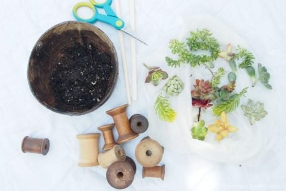 Succulents Planted in Antique Wood Thread Spools : The Magic Onions.com