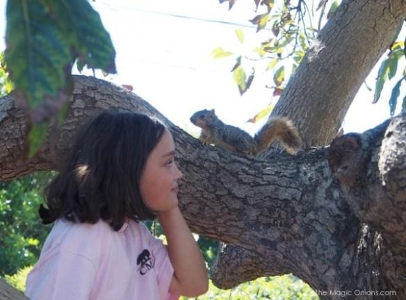 Squirrel Love : The Magic Onions Blog