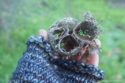 Cactus Skeleton : www.theMagicOnions.com