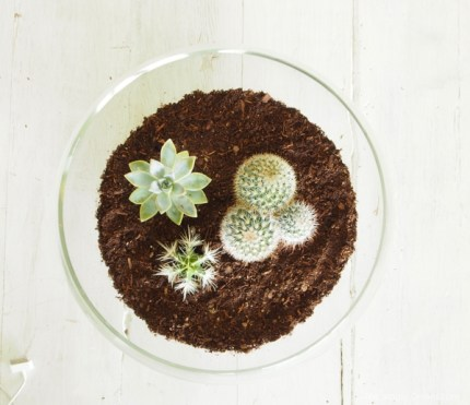 step by step photo tutorial on how to make an indoor succulent terrarium fairy garden