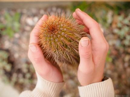 Cactus Nature Walk :: www.theMagicOnions.com