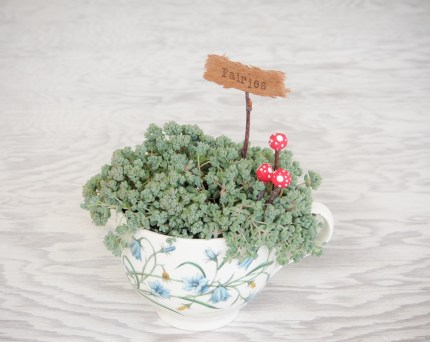 Miniature Toadstools in my Fairy Garden in a Teacup :: DIY Tutorial :: www.theMagicOnions.com