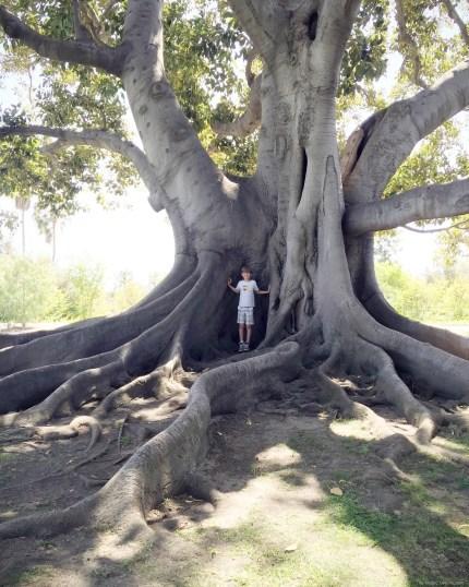 Beautiful tree on The Magic Onions Waldorf inspired blog